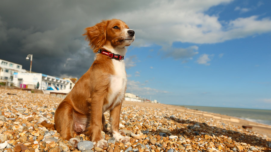 Dog Friendly Hotels Belfast